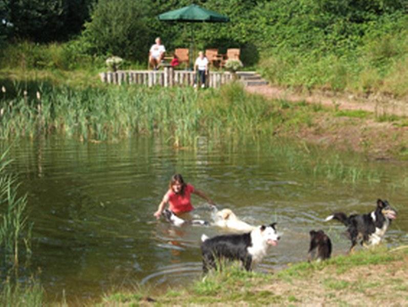 Hond Vriendelijke Tuin : Easterwood hondvriendelijke vakantiewoningen makkinga natuurlijk