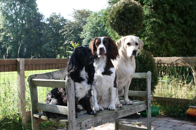 Easterwood Hondvriendelijke Vakantiewoningen Makkinga