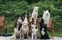 achtergrond-honden-welkom-alternatief_800x533