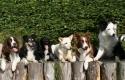 achtergrond-honden-welkom_800x317