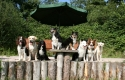 honden-bij-vijver_800x533