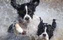 honden-te-water-groot-vierkant_600x600