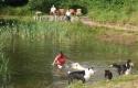 hondvriendelijk-zwemmen-belgen_797x600