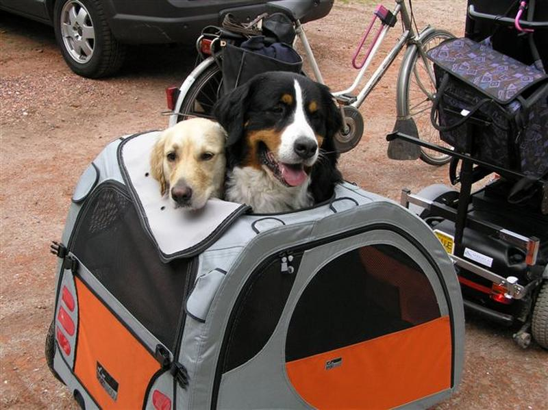 Hond Vriendelijke Tuin : Omheinde hondvriendelijke tuin met agility oefenparcours